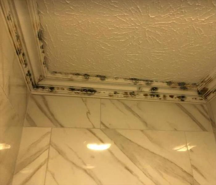 mold on wall and ceiling of home
