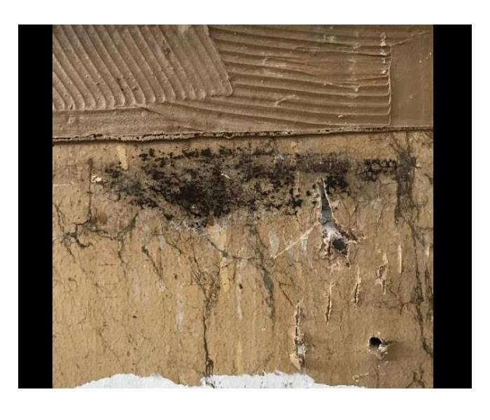 mold behind walls in home